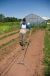 Lauren seeding