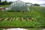 Hello lettuce