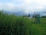 nettle hill